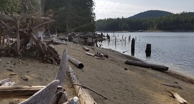 trees beach b.c. rec sites campsites lake