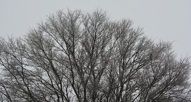 trees nature winter