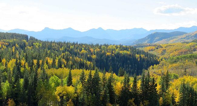 albeta forest nature