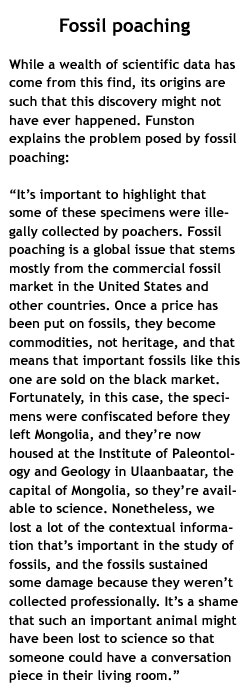 Fossil poaching