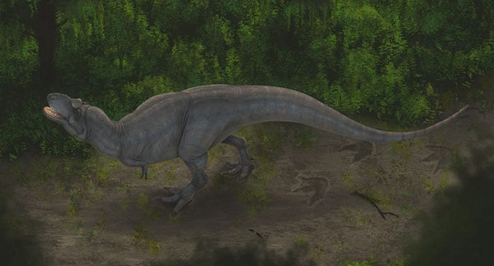 Artists reconstruction of a tyrannosaur